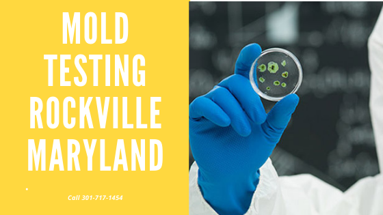 Mold Testing Rockville Maryland